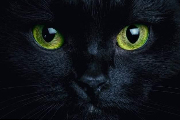 Tlusté černé kočičky