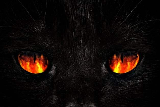 dobrá tlustá černá kočička