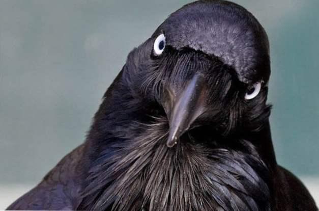 Raven haak mijn ruimte Casual Dating vreugde