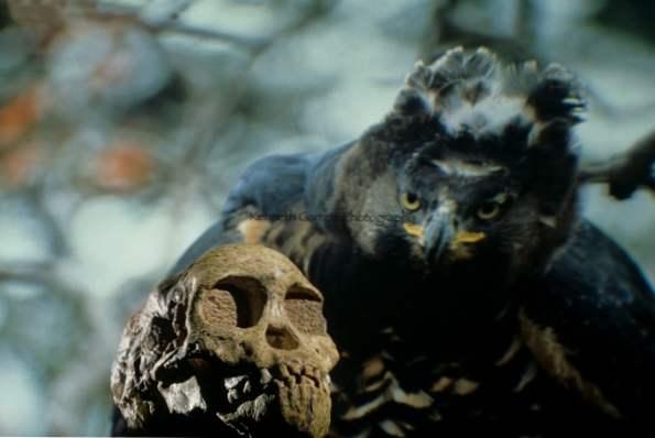 sání ptáka filmy