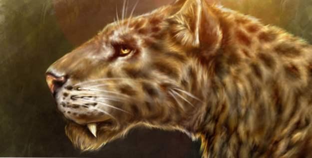 obrovská africká kočička