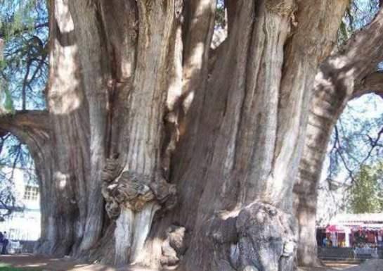 přesnost datování kroužků stromů pnp seznamka